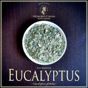 Eucalyptus biologique, eucalyptus globulus