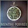 Menthe poivrée, Mentha piperita