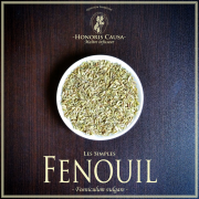 Fenouil biologique, Foeniculum vulgare