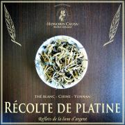 Récolte de platine, thé blanc bio