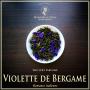 Violette de Bergame, thé vert bio