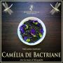Camélia de Bactriane thé noir bio